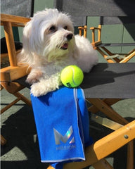 Venus-Williams-Dog-Clothes-Havanese