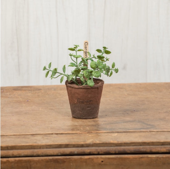 Small Oregano in Peat Pot