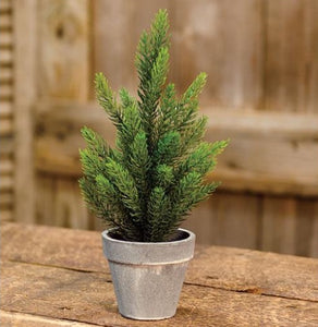 Potted Tahoe Pine Tree - 12""