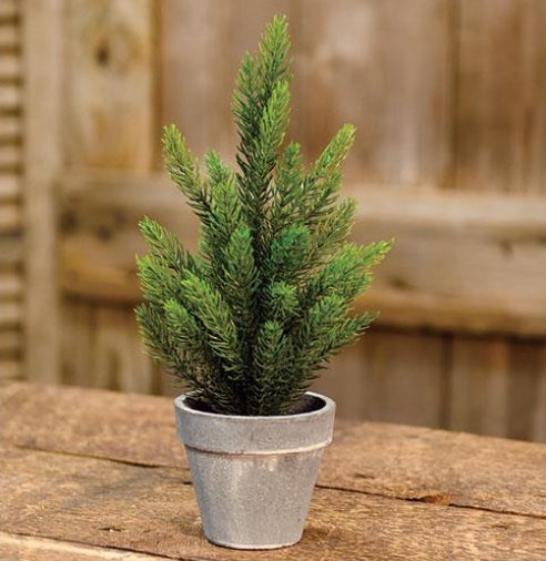 Potted Tahoe Pine Tree - 12