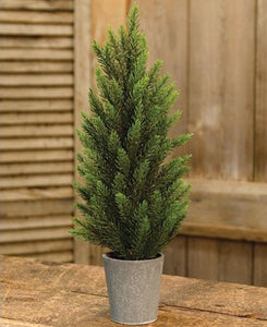 Potted Tahoe Pine Tree - 17""