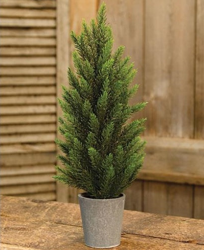 Potted Tahoe Pine Tree - 17