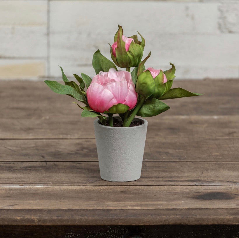 Potted Pink Peony - 7""