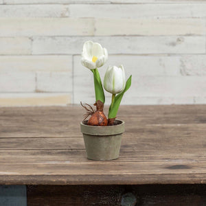 Potted White Tulips - 10""
