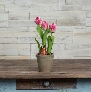 Potted Pink Tulips - 15.5""