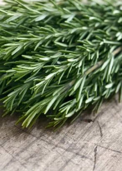 Spotlight on Rosemary Essential Oil