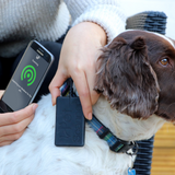 PetScanner microchip reader and app in use scanning a Spaniel
