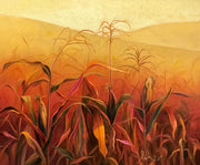 Corn Fields of Guatemala