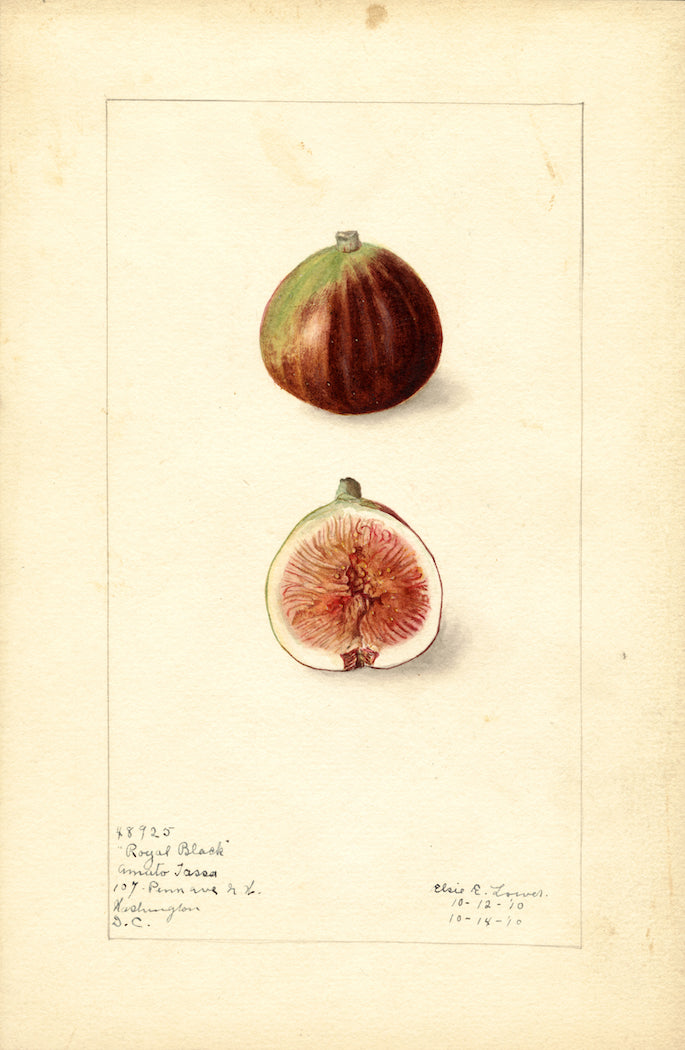 The History Behind Those Trendy Fruit Illustrations