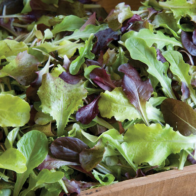 Gourmet Lettuce Mix Seeds