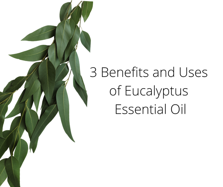 Eucalyptus Essential Oil: 3 benefits and Uses