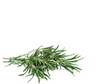 rosemary essential oil | Red's Gone Green