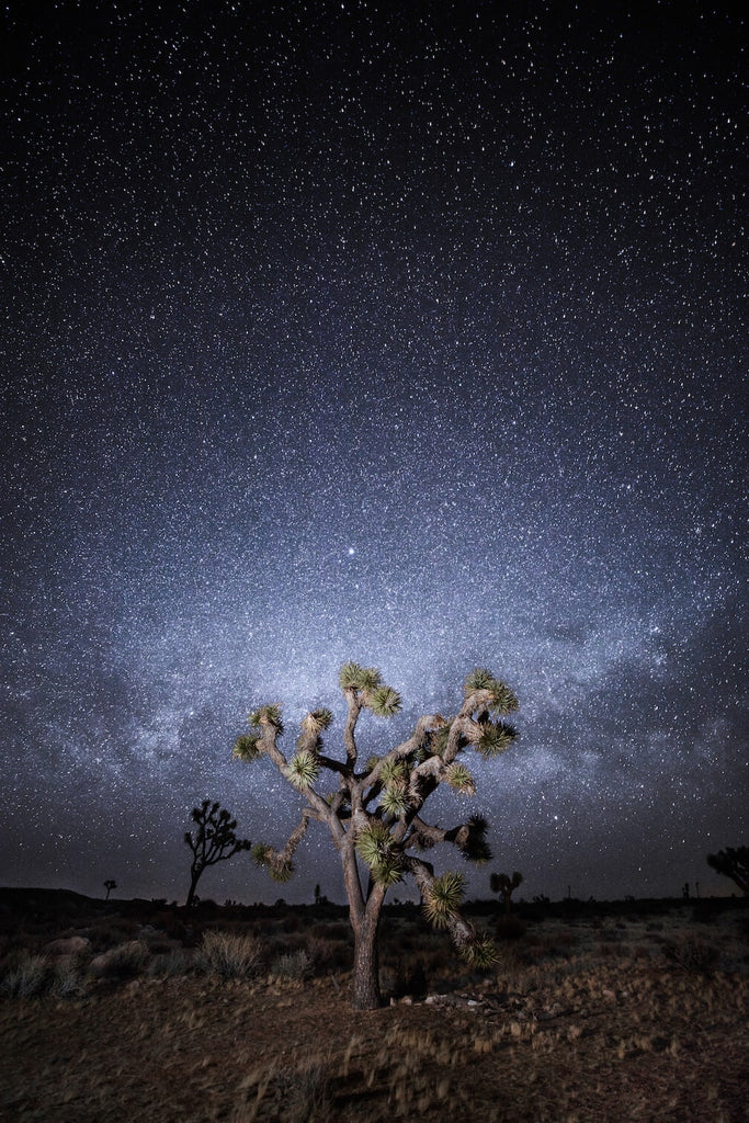 Joshua tree national park under the stars