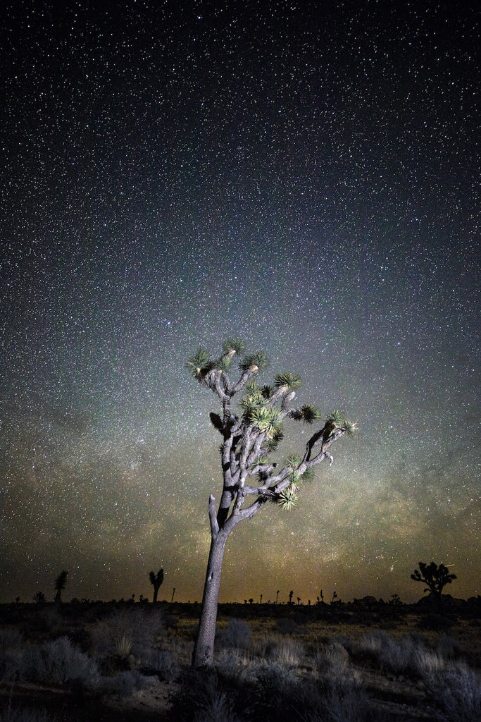 a joshua tree under the stars at night