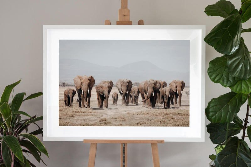 Elephant Fine Art Photography - Elephant Herd