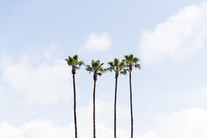 Landscape Fine Art Photography - Four Palms