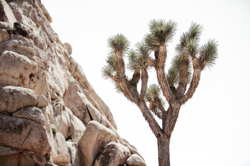 Joshua Tree Fine Art Photography - Growth
