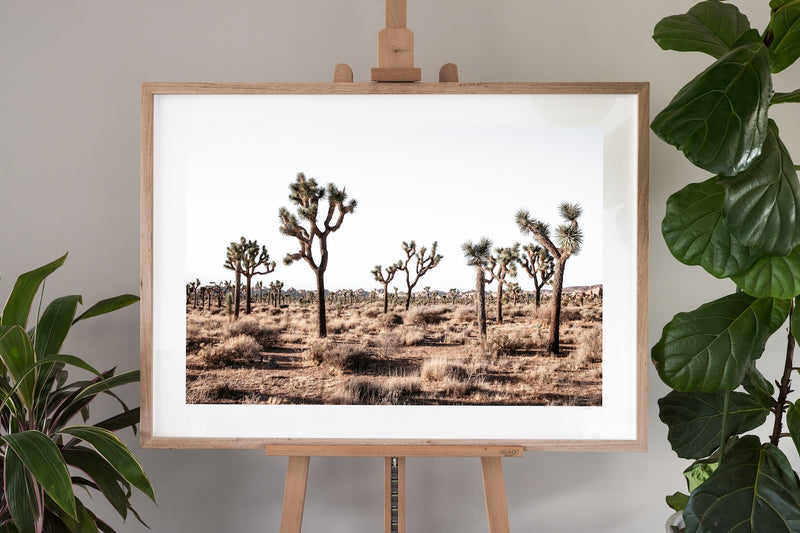 Joshua Tree Fine Art Photography - Desert Daggers