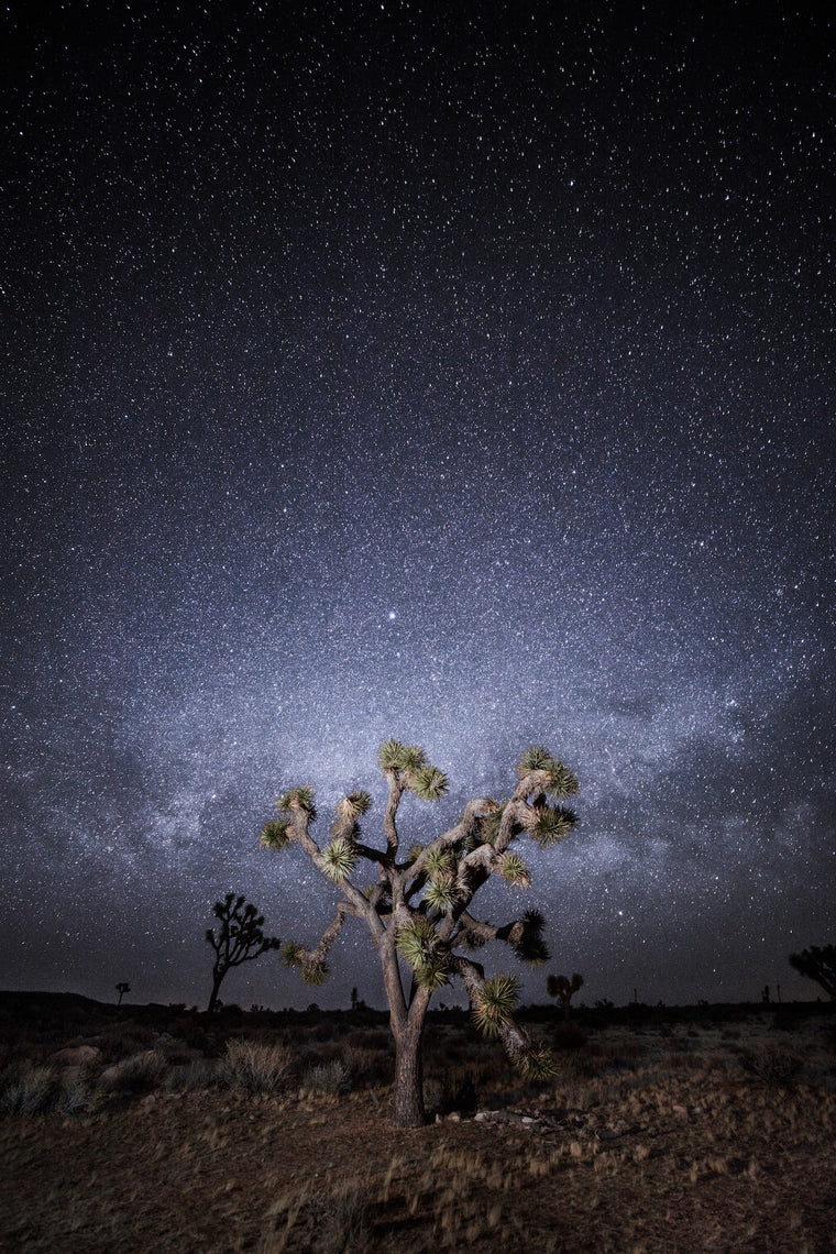 Joshua Tree Fine Art Photography - Joshua Nights