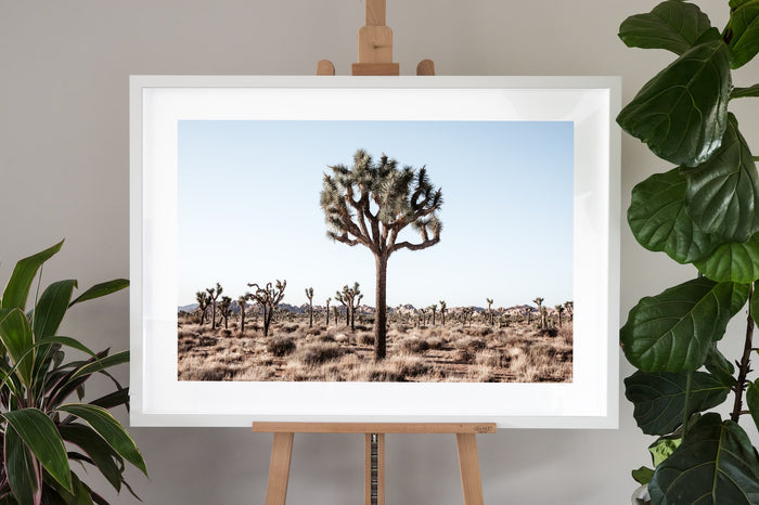 Joshua Tree Fine Art Photography - Joshua Tree