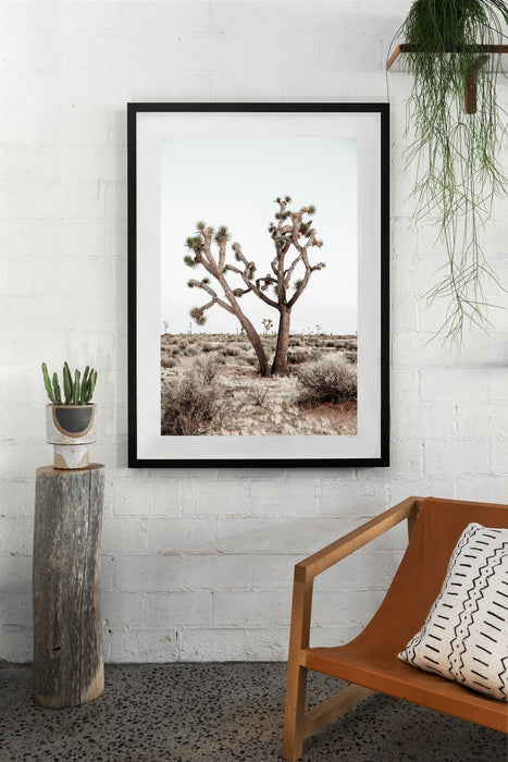 Joshua Tree Fine Art Photography - Last Light
