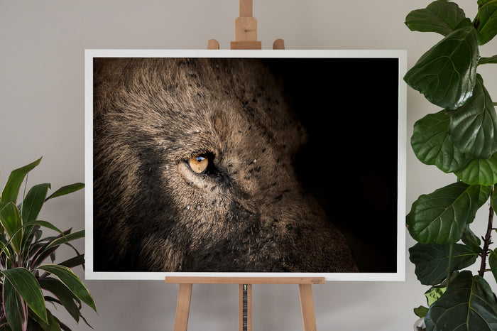 Lion Fine Art Photography - Eye Catcher