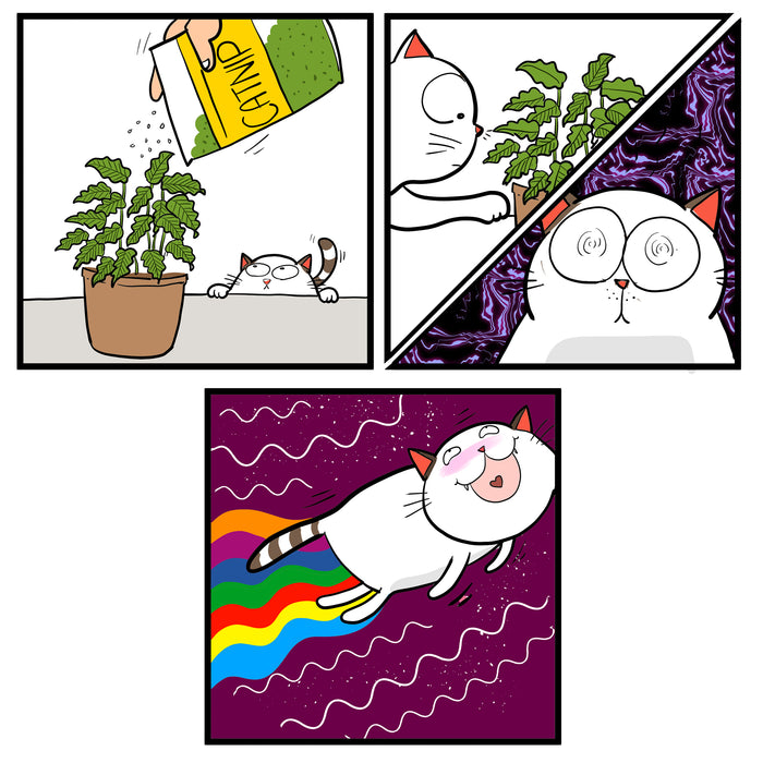 Catnip and cats