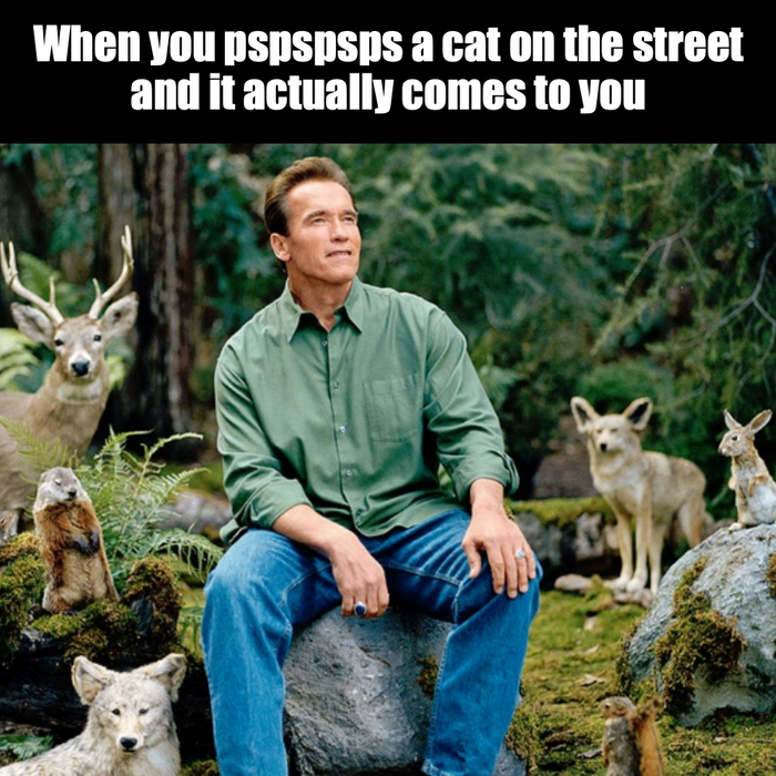 When you pspspsps a cat on the street