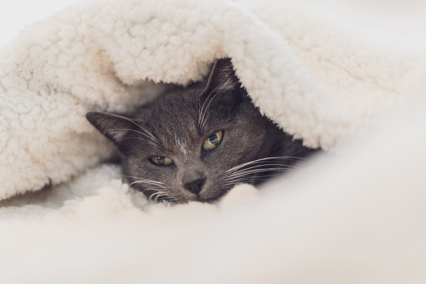 Ultimate guide for cat beds and furniture