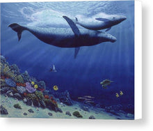Baby Humpback - Canvas Print - visitors