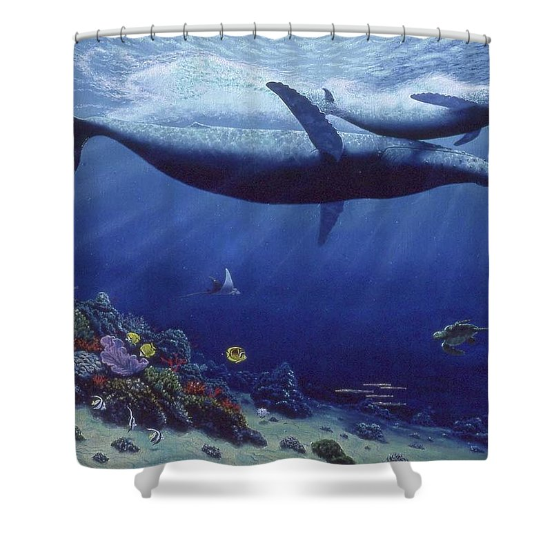 Baby Humpback - Shower Curtain - visitors