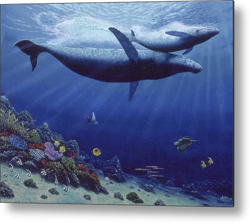 Baby Humpback - Metal Print - visitors