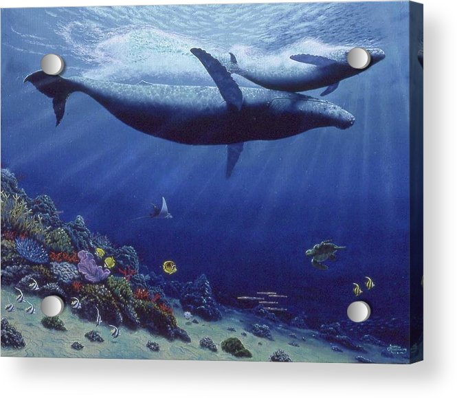 Baby Humpback - Acrylic Print - visitors