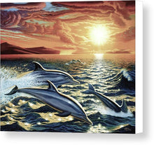 Dolphin Dream - Canvas Print - visitors