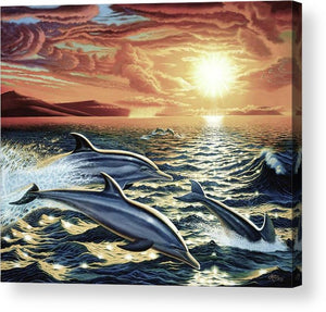 Dolphin Dream - Acrylic Print - visitors