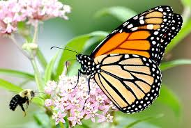 "Monarch Butterfly ""Way Station Garden"" Starter Kit - visitors"