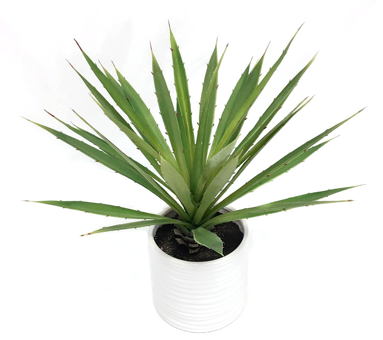 19 Inch Succulent Yucca Plant With Decorative Modern White Pot
