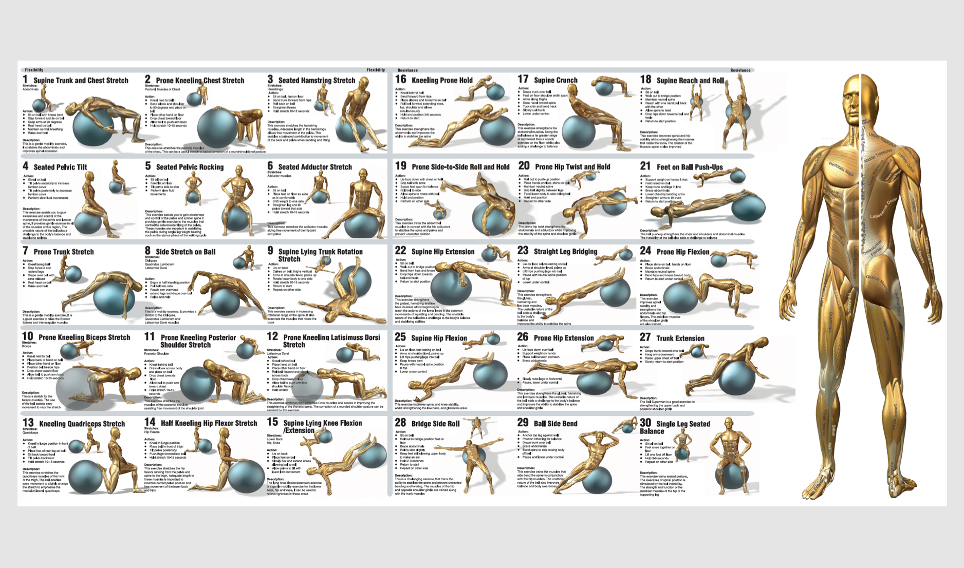 Exercise Ball Workouts Chart Wiring Diagrams