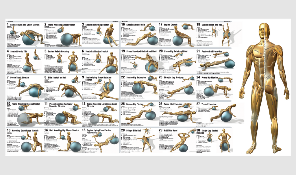 Exercise - Ball Chart