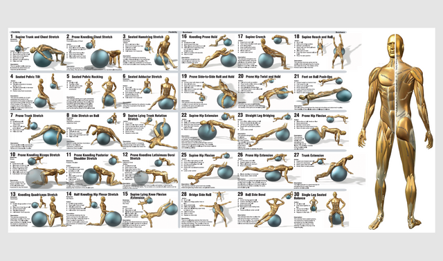 Swiss-Ball Exercise Chart