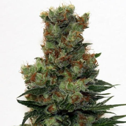 Ripper Seeds - Badazz - The JuicyJoint