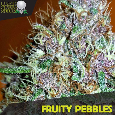 Black Skull Seeds - Fruity Pebbles