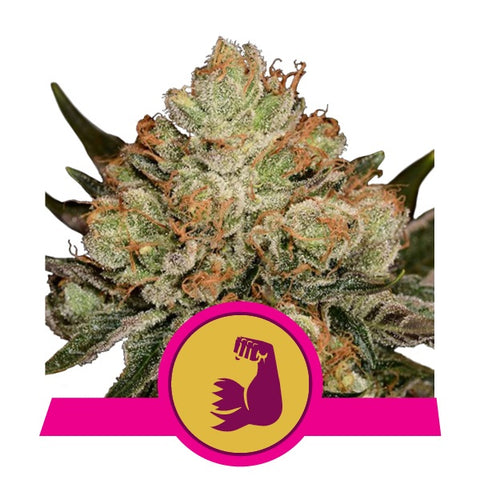 Royal Queen Seeds - Hulkberry