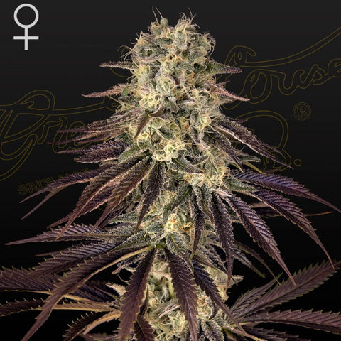 Green House Seeds - Kong's Krush