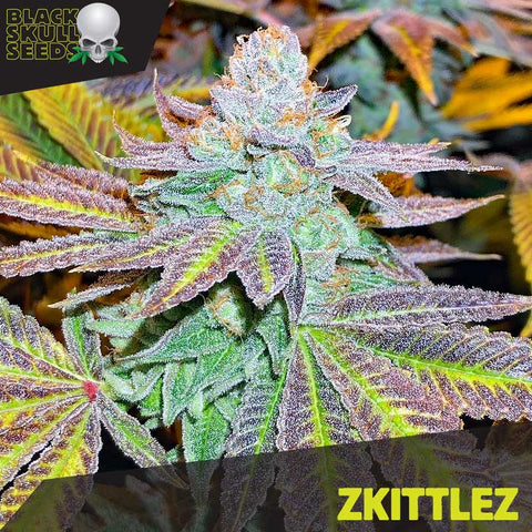 Black Skull Seeds - Zkittlez