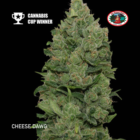 Big Buddha Seeds - Cheese Dawg - The JuicyJoint