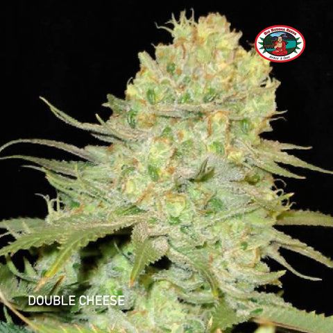 Big Buddha Seeds - Double Cheese - The JuicyJoint