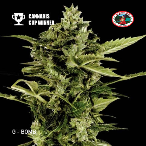 Big Buddha Seeds - G-Bomb - The JuicyJoint