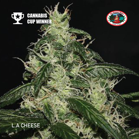 Big Buddha Seeds - L.A Cheese - The JuicyJoint
