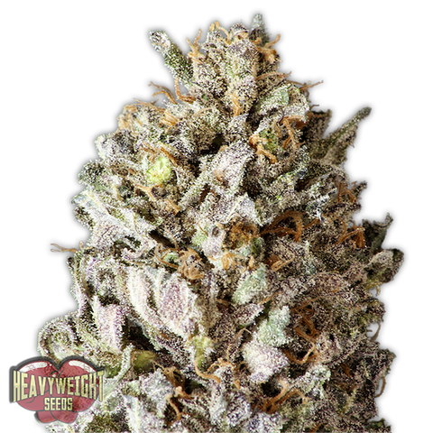 Heavyweight Seeds - Diesel Drift
